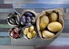 Kolorowe ziemniaki - żółte, fioletowe i purpurowe