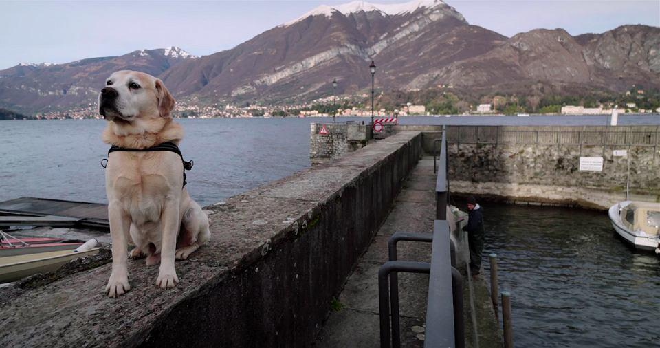 Labrador Ice w serialu dokumentalnym 'Psy'