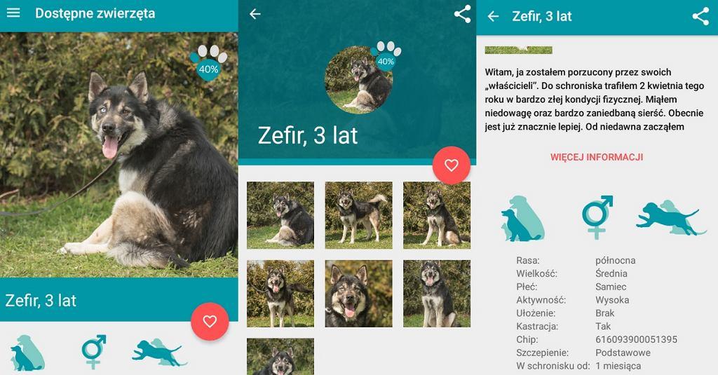Tak wygląda aplikacja, pomagająca w adopcji zwierząt