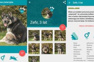 """Gdańsk stworzył """"Tindera dla zwierząt ze schroniska"""". Aplikacja ułatwi adopcję zwierzaków"""