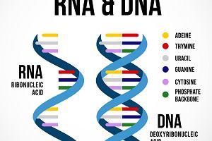 Genetyka: RNA, rodzaje RNA, wirusy RNA
