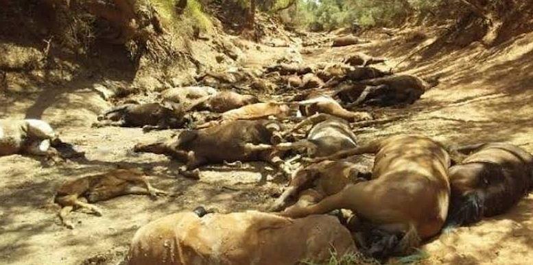Rekordowe upały w Australii zabijają dzikie zwierzęta
