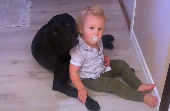 Obok dziecka usiadł wielki pies. Jego reakcja na widok niemowlęcia jest hitem internetu