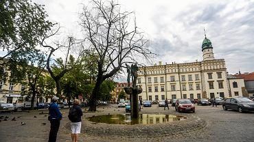 Pl. Wolnica - uschnięte drzewa