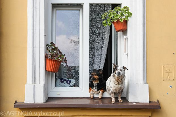 Spinki, wymyślne ubranka, wózki. Polacy tracą głowę dla... psów