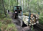 Przyłapani na nielegalnej wycince dalej pracują w Lasach Państwowych