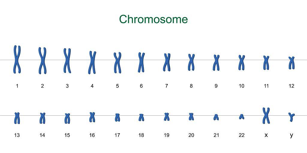 Chromosom jest strukturą wewnątrzkomórkową, która jest nośnikiem informacji genetycznej