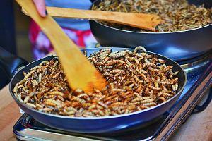 Co powiecie na robaki w kuchni? Agencja UE ds. żywności uznała mącznika młynarka za jadalnego i zdrowego