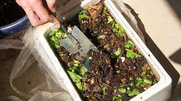Domowy kompostownik z dżdżownicami i zmywaki robione na drutach - nietypowe pomysły na typowe problemy ekologiczne