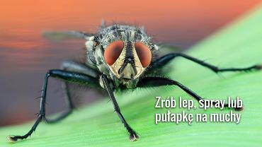 Z muchami można walczyć naturalnymi środkami