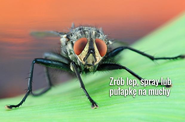 Sposoby na muchy. Jak się pozbyć much z domu?
