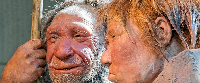 Neandertalczycy mieli grupy krwi takie jak my - niespodziewane odkrycie