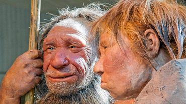 Rekonstrukcja wyglądu neandertalczyka w muzeum w Mettmann, Niemcy
