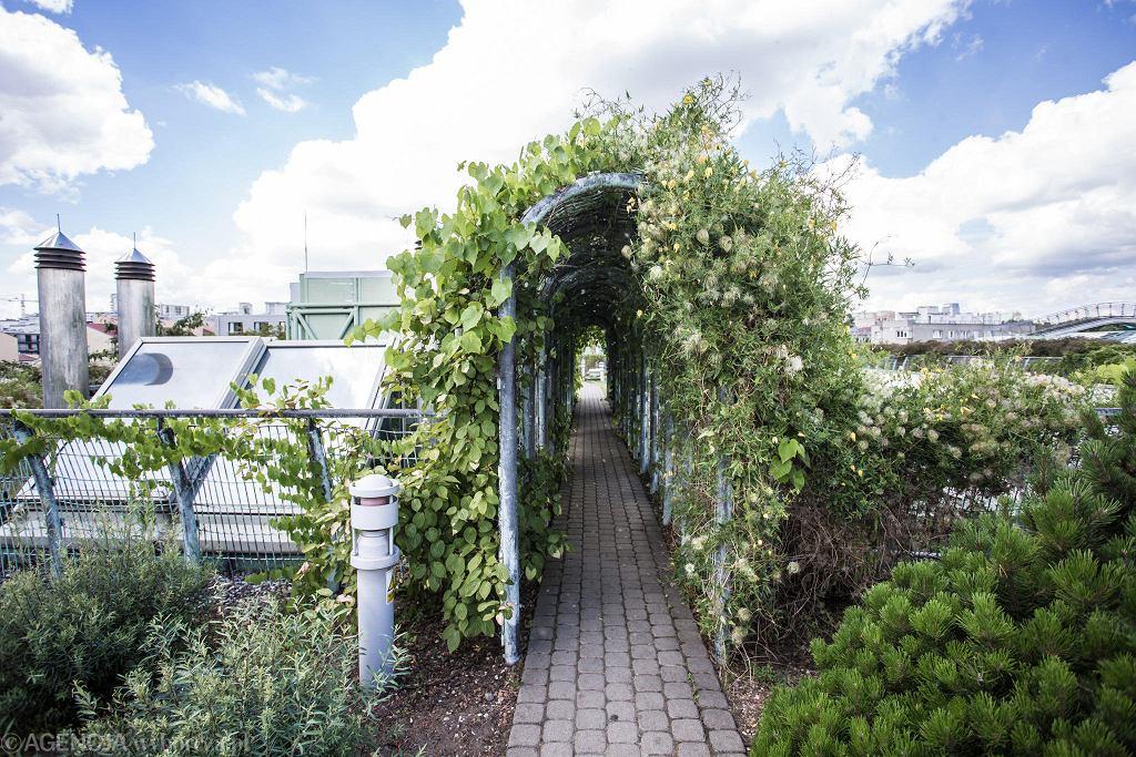 Ogród na dachu BUW-u / ADAM STĘPIEŃ
