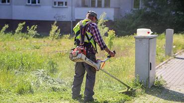 Koszenie trawy w Bydgoszczy
