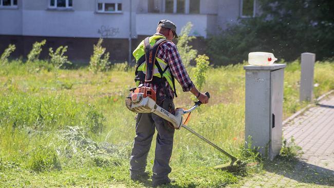 Koszenie traw jednak szkodliwe dla alergików? Sprawdzamy