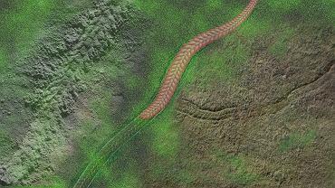 Wizja artystyczna przedstawiająca Yilingia spiciformis i zostawione przez nią tropy w osadach