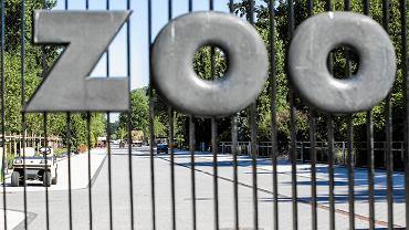 Aleja główna w warszawskim ZOO