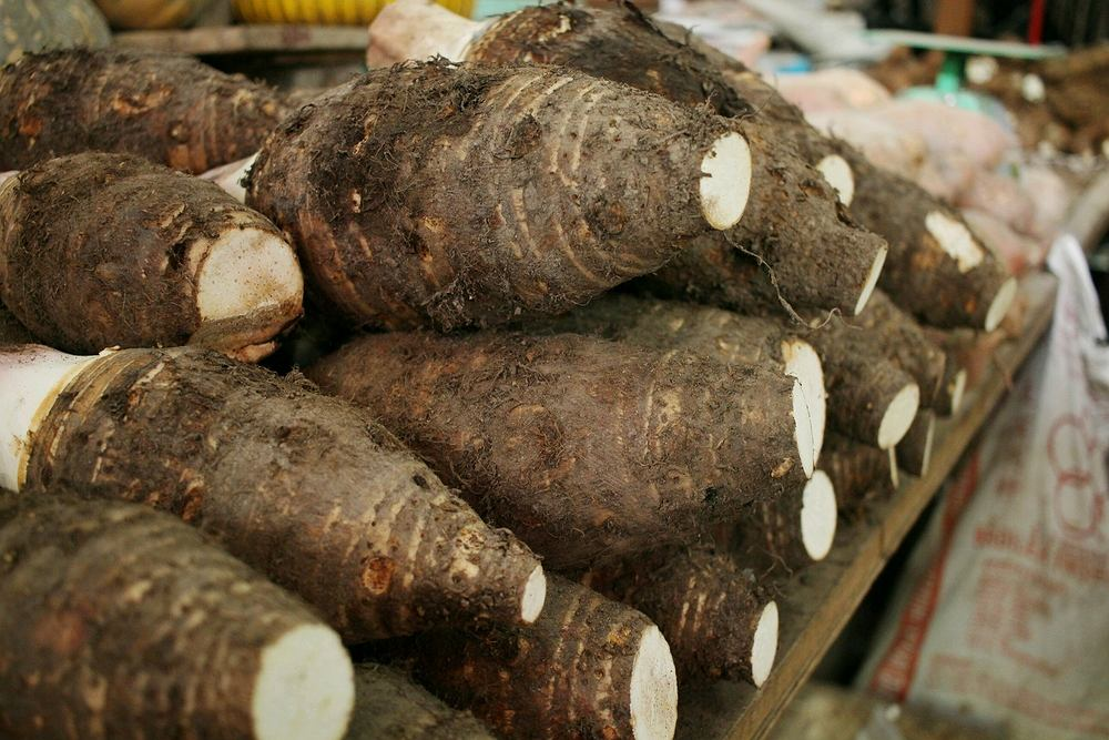 Pochrzyny stanowiły też bardzo ważne pożywienie dla pierwotnych zbieraczy łowców w strefie lasów równikowych