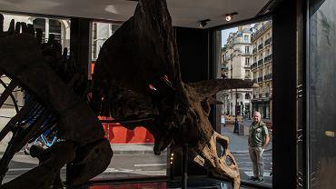 Szkielet wielkiego dinozaura sprzed 66 mln lat trafi na aukcję. Szacunkowa cena to 1,2 mln euro