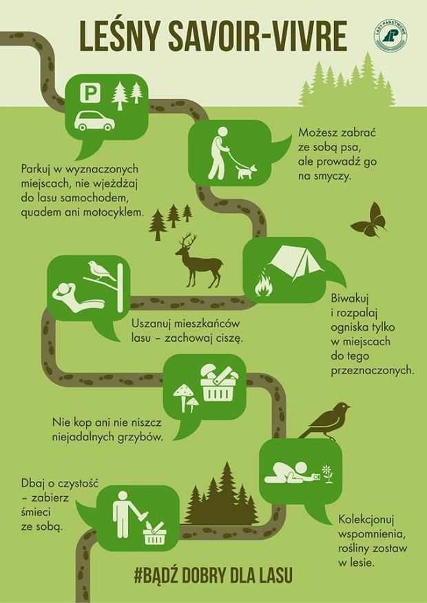 Jak zachowywać się w lesie
