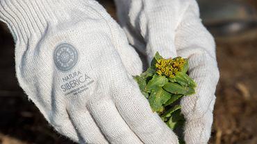 Rośliny, które wzmacniają działanie kosmetyków - poznaj moc adaptogenów!