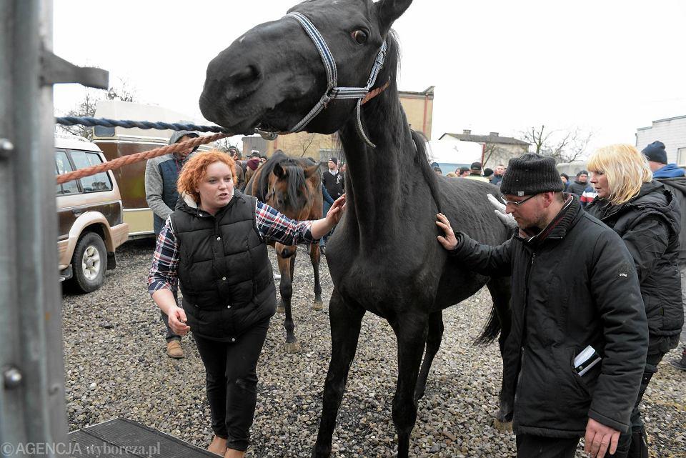 Wstępy w Skaryszewie to jedna z najstarszych i największych targów końskich w Europie.