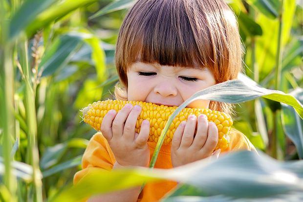 Kukurydza - zboże znakomite nie tylko dla tych, którzy unikają glutenu
