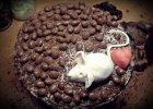 Tort czekoladowy - Zdjęcia