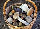 """""""Jesteśmy narodem grzybiarzy. Ale nie wiemy, że o każdej porze roku znajdziemy grzyby, które są smaczne i jadalne"""""""