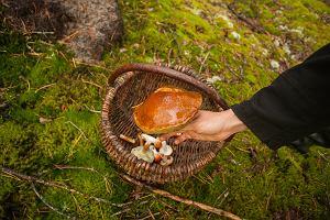 """Jeśli grzyb nie jest gorzki to na pewno jadalny? Wszystko o """"sprawdzaniu"""" grzybów językiem"""