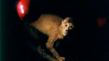 Joao Maria Gusmao i Pedro Paiva, 'Jabłko Darwina, małpa Newtona'