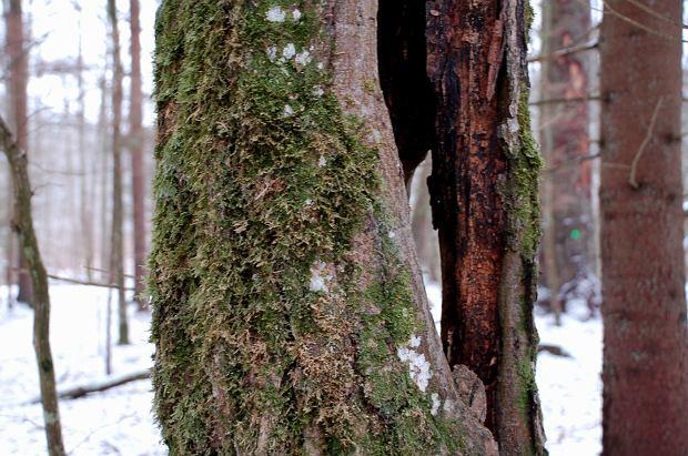 Piotr: Często biegam po lesie, jest to jednak zupełnie inne doświadczanie natury niż powolny spacer (fot: NK)