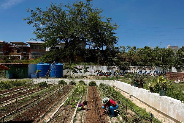 VENEZUELA-AGRICULTURE/