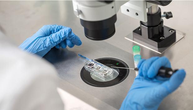"""In vitro a koronawirus. """"Pacjentki zgłaszają niepokój związany z odroczeniem zabiegów"""""""