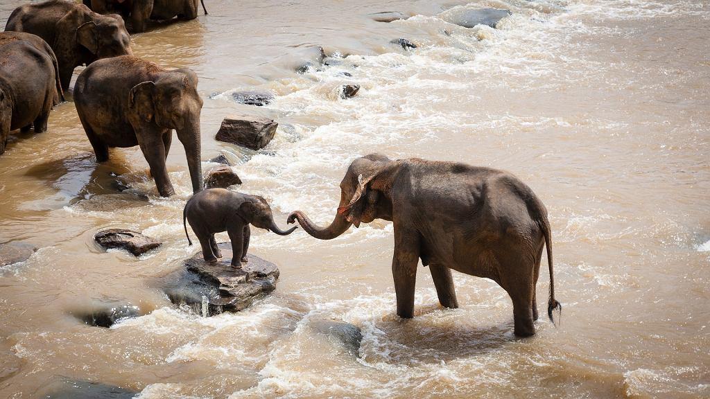 Indie. Znaleziono 18 martwych słoni. Mogły zginąć od uderzenia pioruna (zdjęcie ilustracyjne)