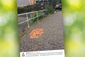Artystka rozsypała 1500 zł drobnymi na ulicy. Reakcje przechodniów nagrała ukrytą kamerą
