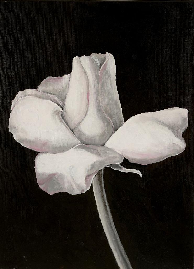 Kwiaty-dwa światy, Hanna Pyrzyńska / materiały prasowe