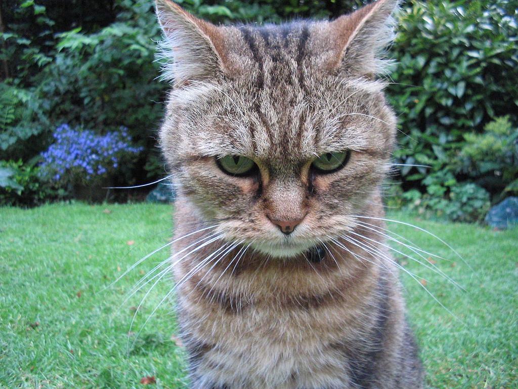 Koty są miłe, naprawdę. Tak przynajmniej twierdzą naukowcy