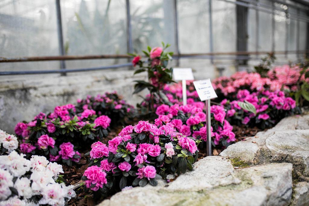 Ogród Botaniczny Polskiej Akademii Nauk w Powsinie / ADAM STĘPIEŃ