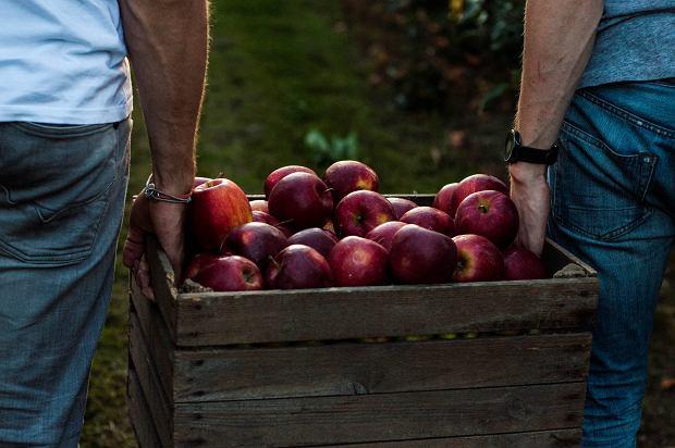 Pełne smaku, świeże i niewoskowane jabłka od Braci Sadowników