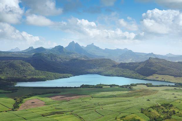 Plantacje trzciny cukrowej na Mauritiusie