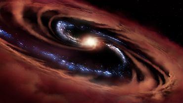 Galaktyka CQ4479 pożerana przez czarną dziurę