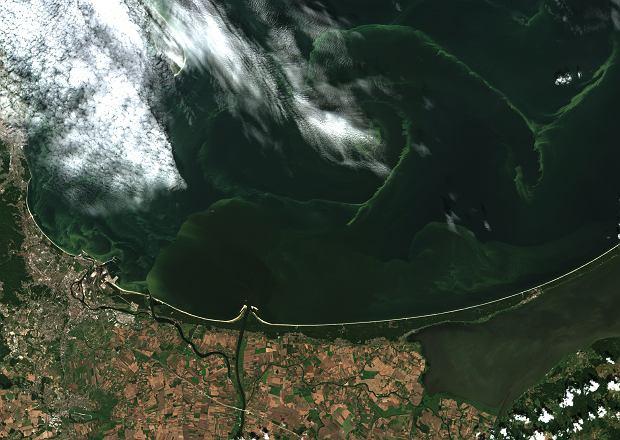 Sinice w Zatoce Gdańskiej widziane z satelity