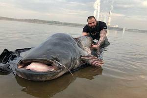 Gigantyczny sum z Zalewu Rybnickiego. 260 cm i 102 kilogramy