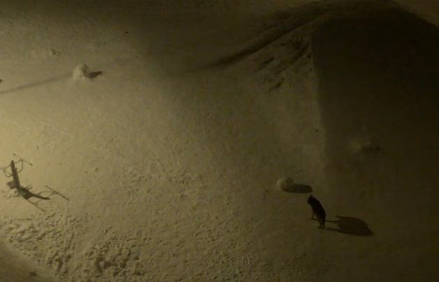 Wilk uchwycony przez kamerę monitoringu w Sanoku