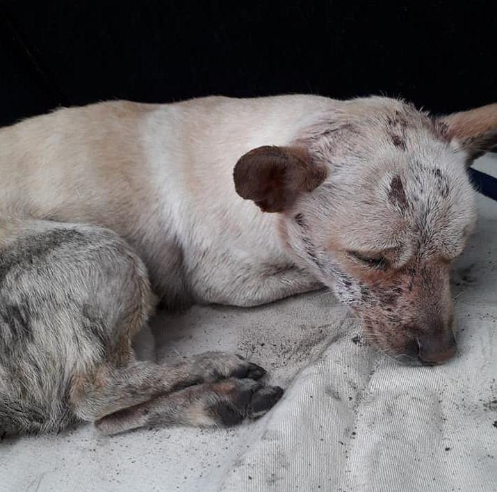 Pies znaleziony w kontenerze na śmieci w Chojnicach