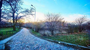 Teren zielony w rejonie skrzyżowania ul. Inflanckiej i Strykowskiej. W tych okolicach planowana jest wycinka.