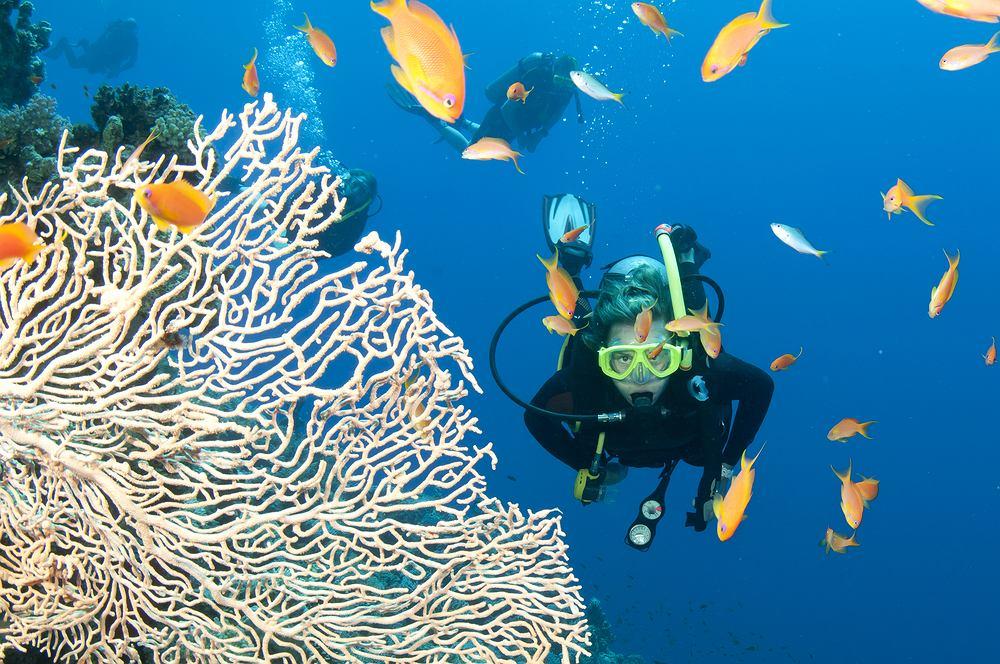 Wielka Rafa Koralowa to największa na świecie rafa koralowa, położona wzdłuż północno-wschodnich wybrzeży Australii, na Morzu Koralowym