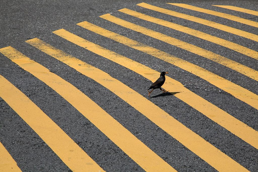 Annais Lopez - 'Migrant. Uciekający ptak'